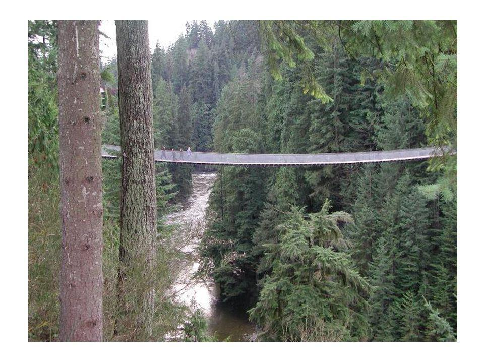 Control Bridge: Constructed of heavy cedar 10 feet above a small, shallow rivulet high handrails and did not tilt or sway Capilano Canyon Suspension Bridge:...a tendency to tilt, sway, and wobble, creating the impression that one is about to fall over the side......230-foot drop to rocks and shallow rapids below the bridge...