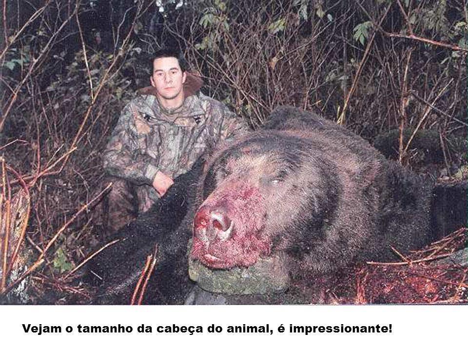 Vejam o tamanho da cabeça do animal, é impressionante!