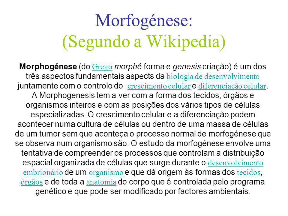 Morfogénese: (Segundo a Wikipedia) Morphogénese (do Grego morphê forma e genesis criação) é um dos três aspectos fundamentais aspects da biologia de desenvolvimento juntamente com o controlo do crescimento celular e diferenciação celular.