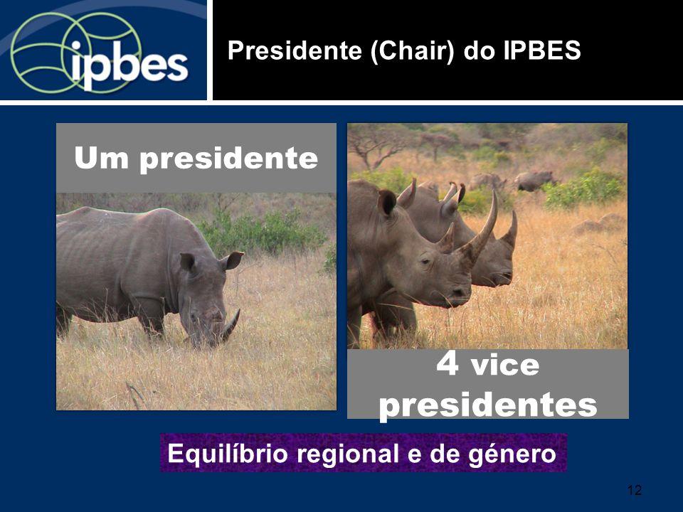 Presidente (Chair) do IPBES 4 vice presidentes Um presidente Equilíbrio regional e de género 12