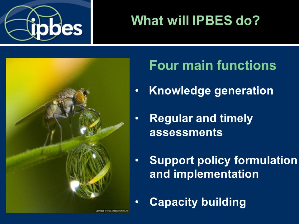 What will IPBES do? Four main functions Knowledge generation Regular and timely assessments Support policy formulation and implementation Capacity bui