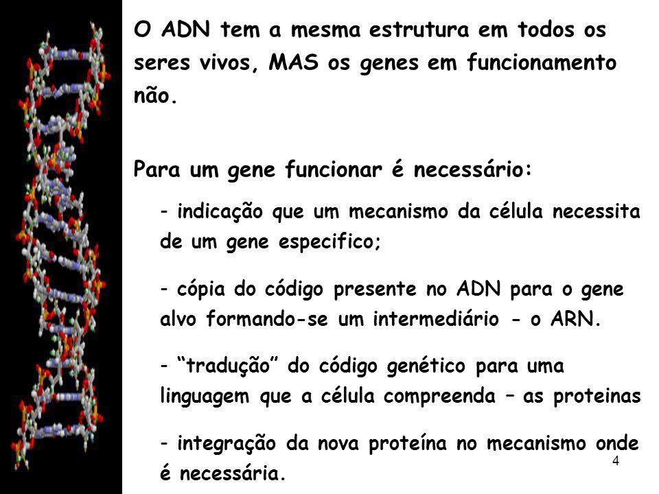 08/06/20145 Os genes entram em funcionamento de várias formas: - activados constantemente quando envolvidos em processos fundamentais à vida; - activados ocasionalmente em situações pontuais (por exemplo, em caso de emergência);