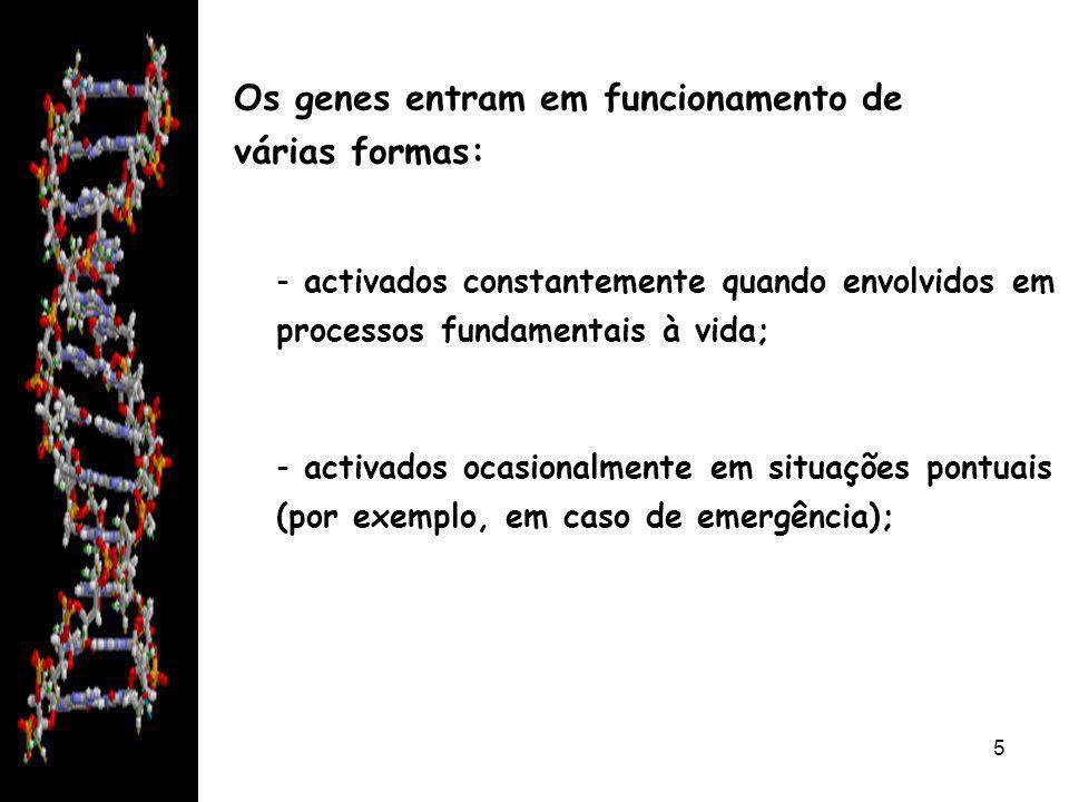 08/06/20146 - podem desaparecer completamente do ADN de uma espécie se a sua função deixar de ser necessária; - podem ser modificados, mantêm a função mas de uma forma mais eficaz; - podem surgir novos genes que providenciam a capacidade de sobrevivencia de uma espécie em condições únicas.