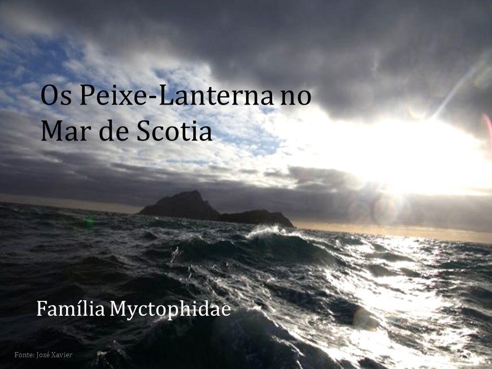 Fonte: José Xavier Os Peixe-Lanterna no Mar de Scotia Família Myctophidae