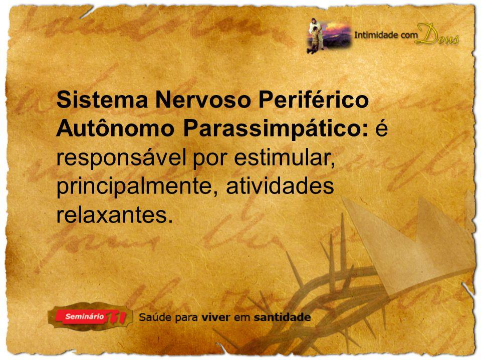 Sistema Nervoso Periférico Autônomo Parassimpático: é responsável por estimular, principalmente, atividades relaxantes.
