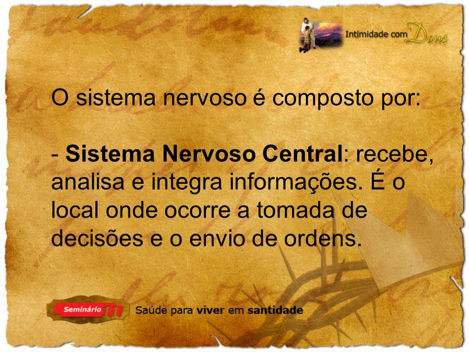 O sistema nervoso é composto por: - Sistema Nervoso Central: recebe, analisa e integra informações. É o local onde ocorre a tomada de decisões e o env
