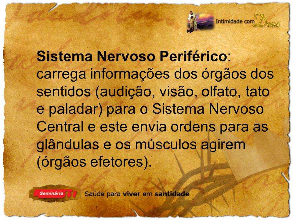 Sistema Nervoso Periférico: carrega informações dos órgãos dos sentidos (audição, visão, olfato, tato e paladar) para o Sistema Nervoso Central e este