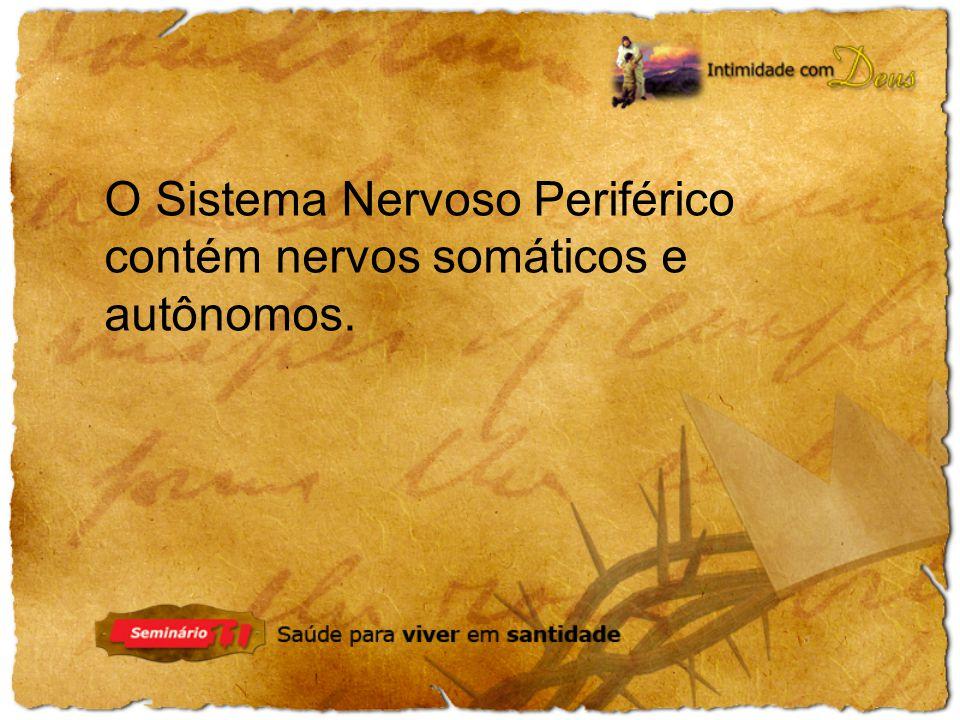 O Sistema Nervoso Periférico contém nervos somáticos e autônomos.