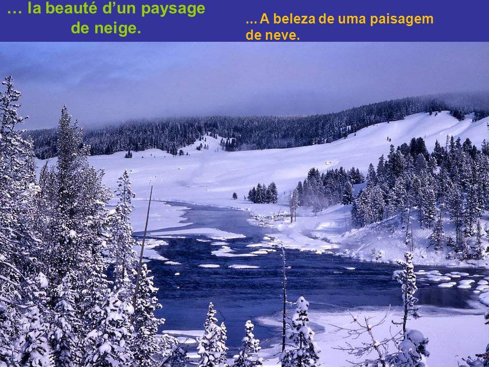 …de la symétrie dun cristal de neige jusquà … Da simetria de um cristal de neve até...