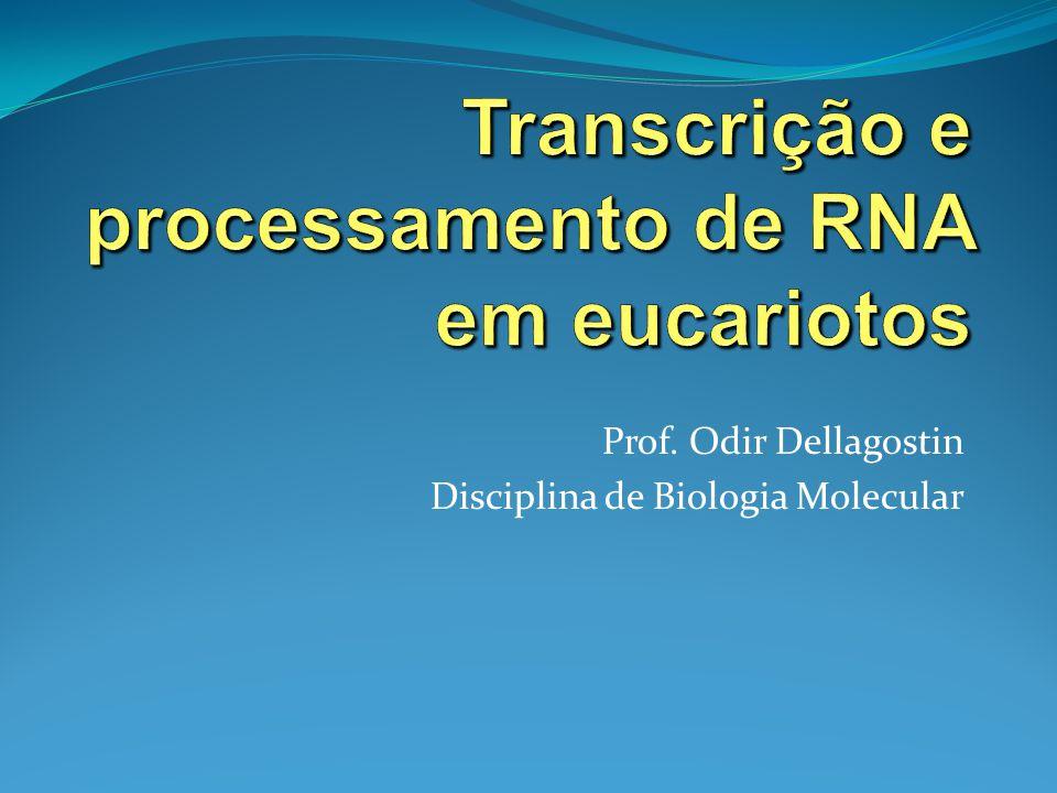 Prof. Odir Dellagostin Disciplina de Biologia Molecular