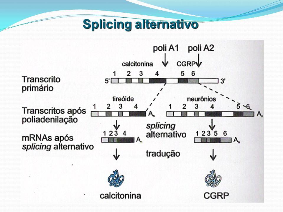Transporte ativo para o citoplasma Spliceossomo – 3000 kDa