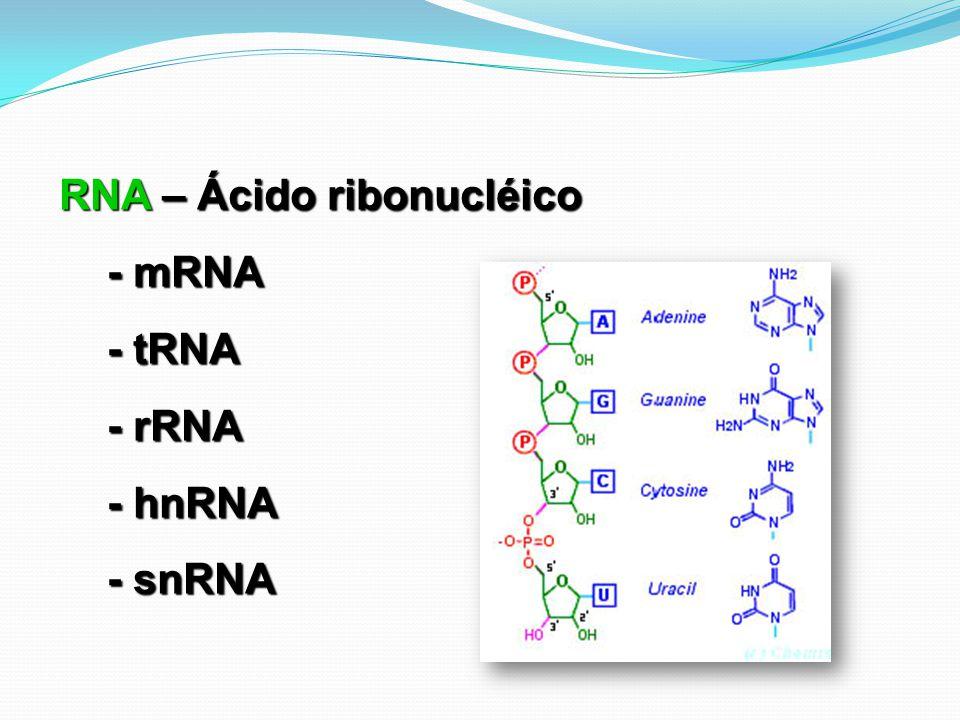 RNA – Ácido ribonucléico - mRNA - tRNA - rRNA - hnRNA - snRNA