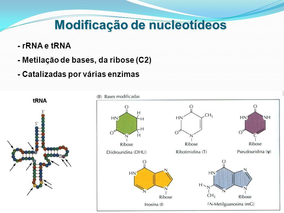 Modificação de nucleotídeos - rRNA e tRNA - Metilação de bases, da ribose (C2) - Catalizadas por várias enzimas