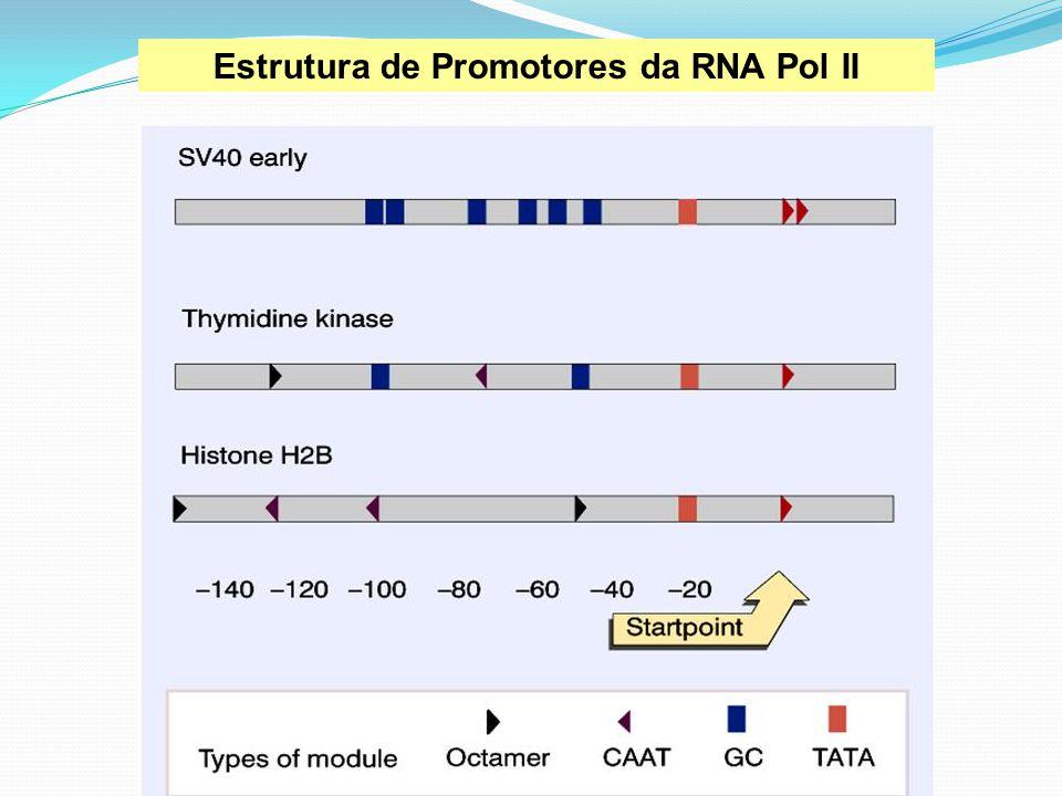 Estrutura de Promotores da RNA Pol II
