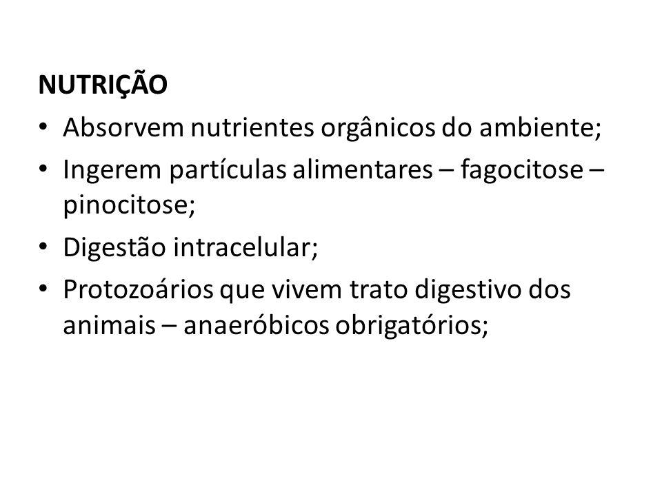 NUTRIÇÃO Absorvem nutrientes orgânicos do ambiente; Ingerem partículas alimentares – fagocitose – pinocitose; Digestão intracelular; Protozoários que