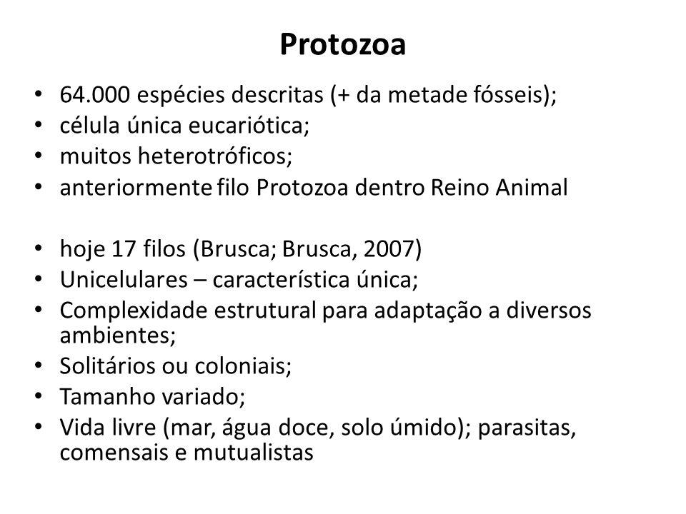 Protozoa 64.000 espécies descritas (+ da metade fósseis); célula única eucariótica; muitos heterotróficos; anteriormente filo Protozoa dentro Reino An