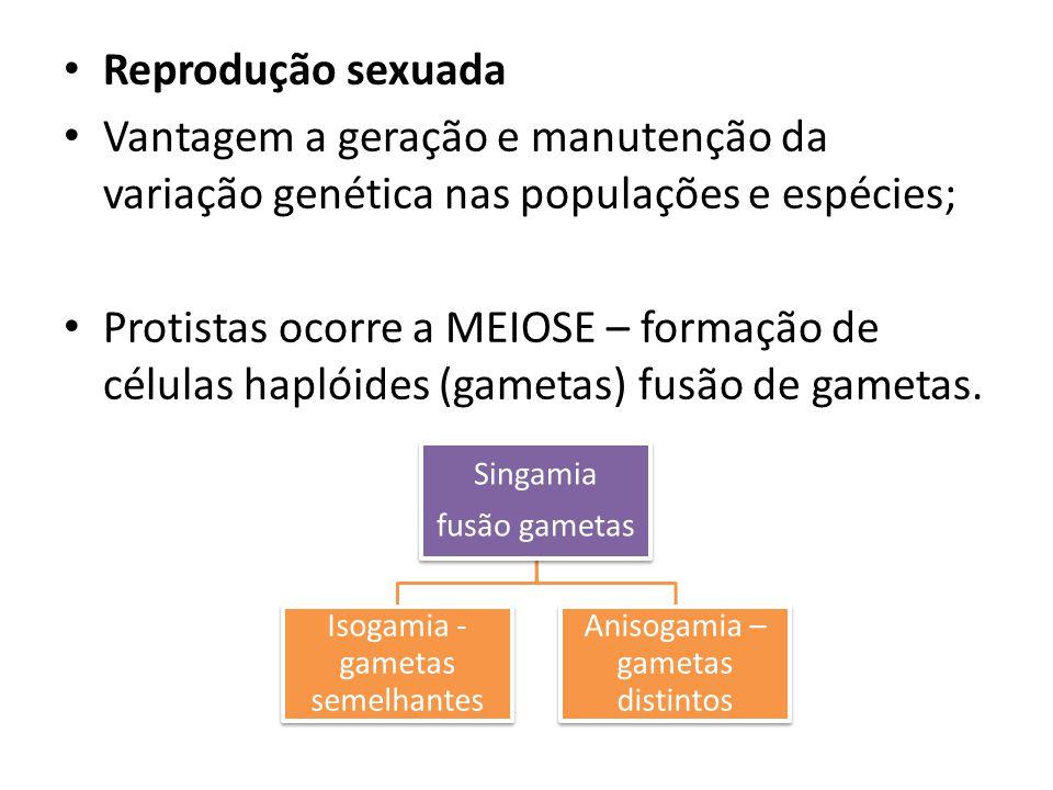 Reprodução sexuada Vantagem a geração e manutenção da variação genética nas populações e espécies; Protistas ocorre a MEIOSE – formação de células hap