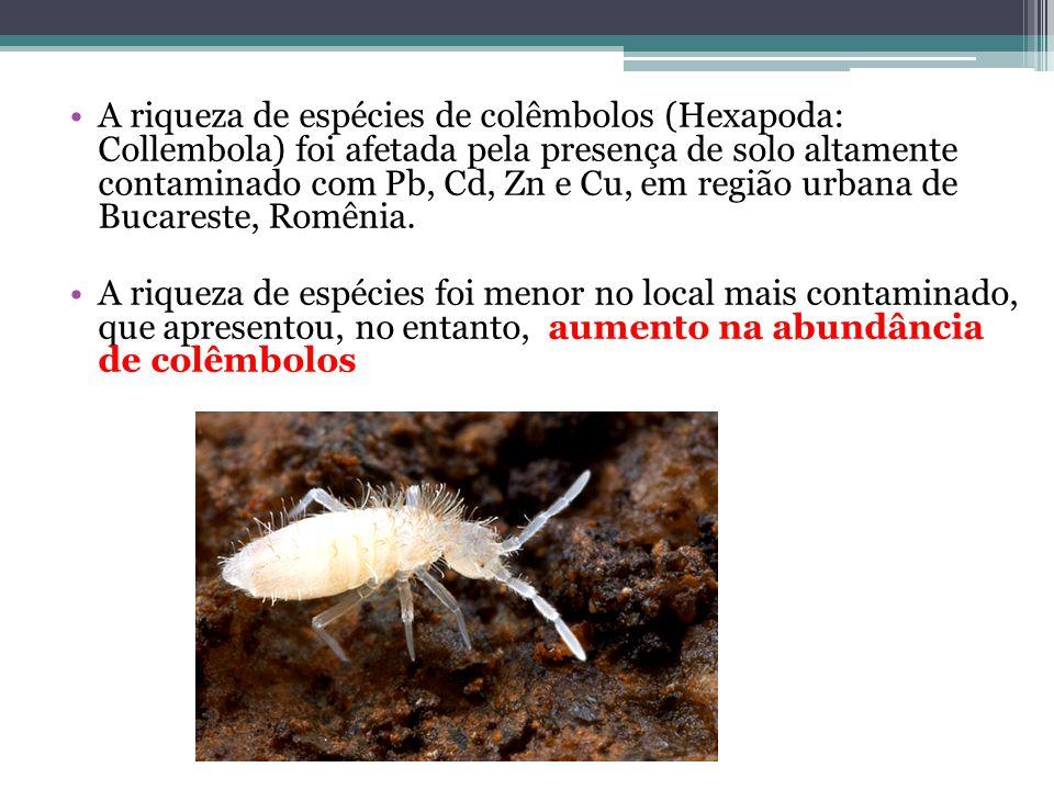 A riqueza de espécies de colêmbolos (Hexapoda: Collembola) foi afetada pela presença de solo altamente contaminado com Pb, Cd, Zn e Cu, em região urba