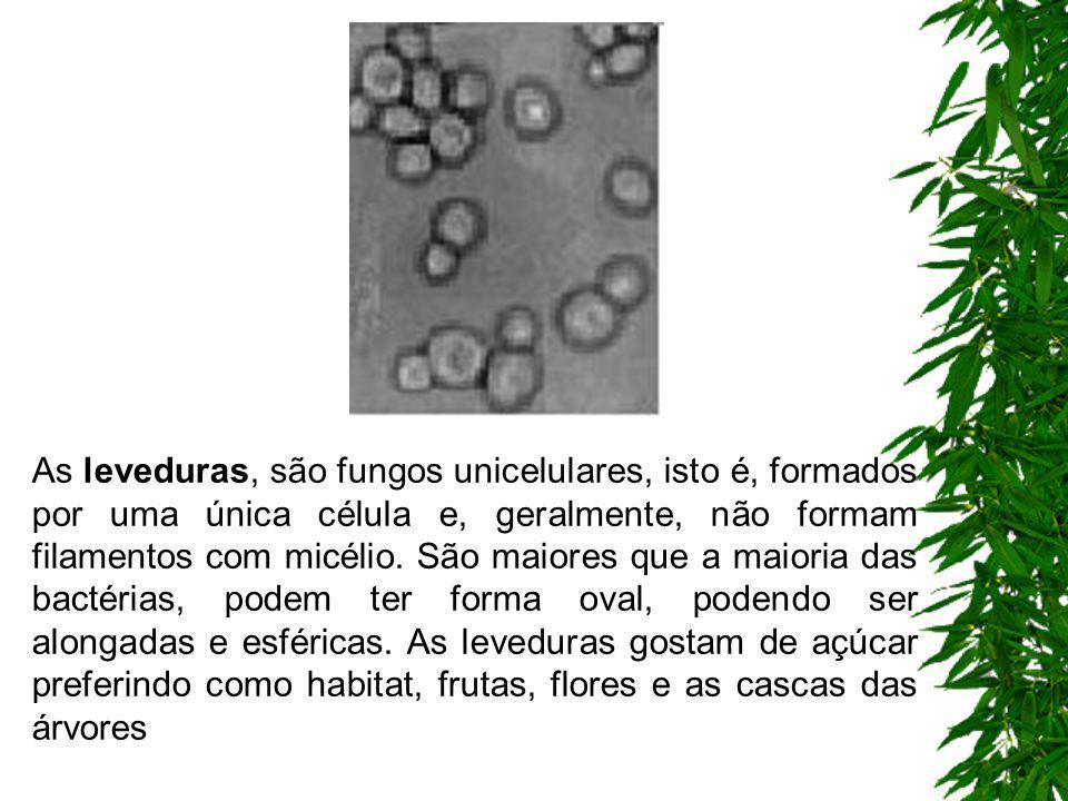 os bolores e mofos são fungos que apresentam muitas células, organizadas como filamentos, que observados em lentes de grande aumento parecem pequenas
