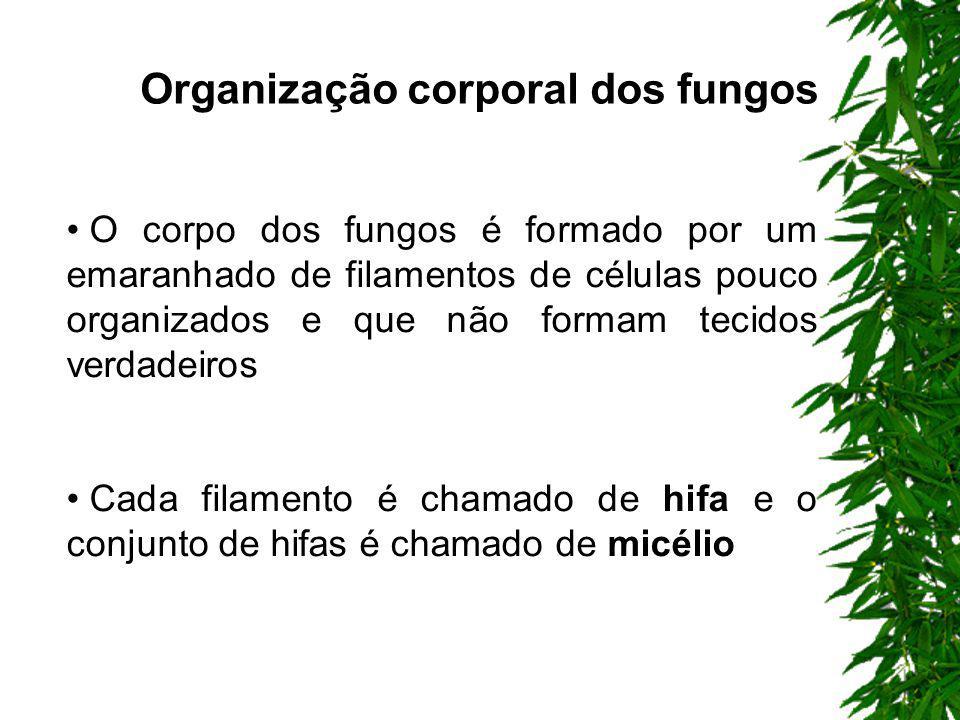 Micologia: é o ramo da Biologia que estuda os fungos, ela engloba o estudo de um grande número de seres pluricelulares ou macroscópicos ou unicelulare