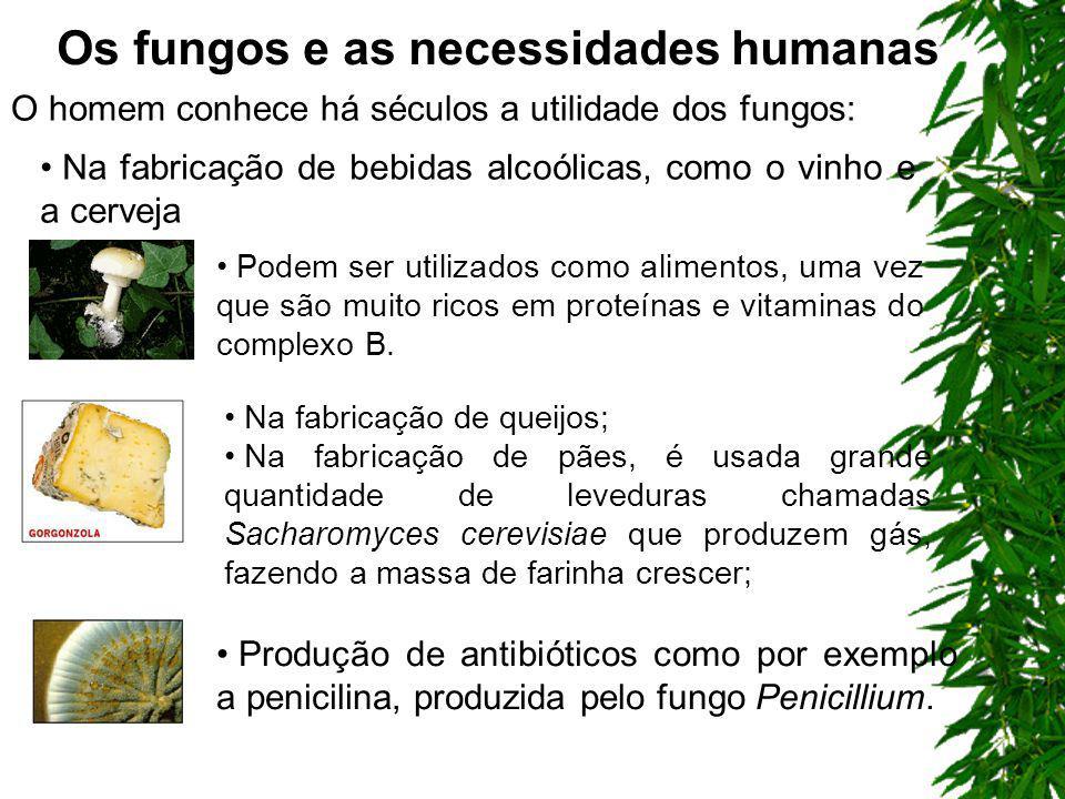 Associação com outros seres vivos Micorrizas: associação de fungos com raízes de plantas Líquens: associação de fungos com algas Nas associações os fu