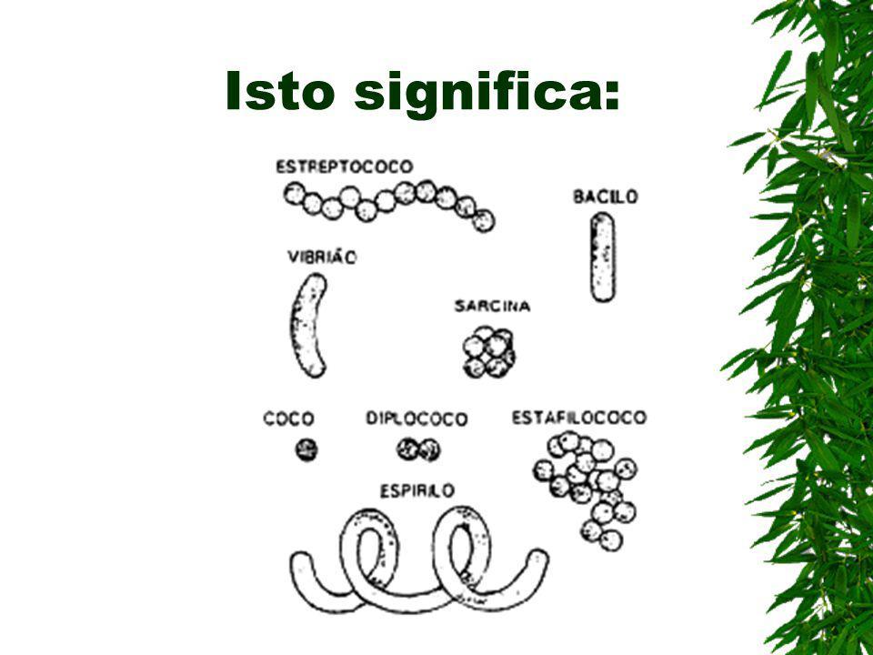 Formas das bactérias Vida solitária cocos, bacilos, vibriões e espirilos Vida colonial estreptococos, sarcina, estafilococos e diplococos