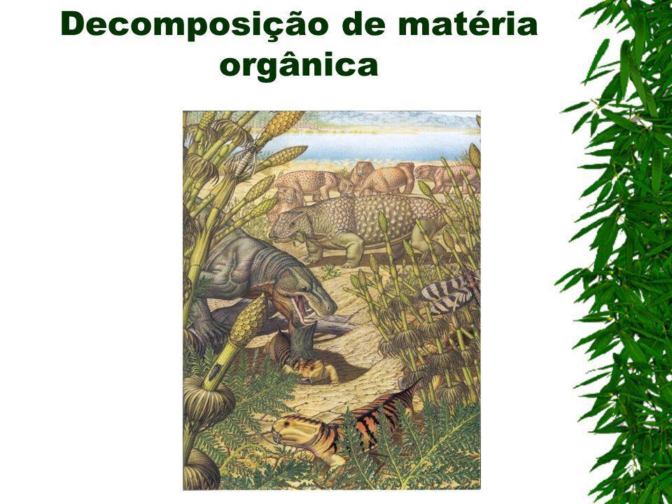 TRATAMENTO DE ESGOTOS na degradação dos resíduos orgânicos. Nas usinas de reciclagem de lixo, são utilizadas na produção de adubos de compostagem. BIO