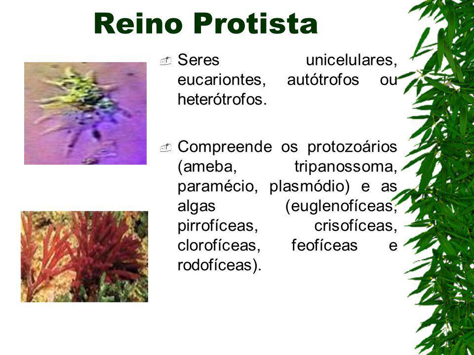 Reino Monera Seres unicelulares, procariontes, heterótrofos ou autótrofos. São representantes: as bactérias e as cianobactérias.