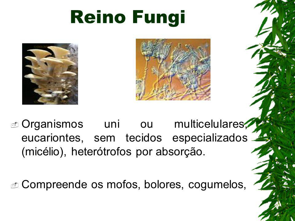 os bolores e mofos são fungos que apresentam muitas células, organizadas como filamentos, que observados em lentes de grande aumento parecem pequenas árvores, todas ramificadas.
