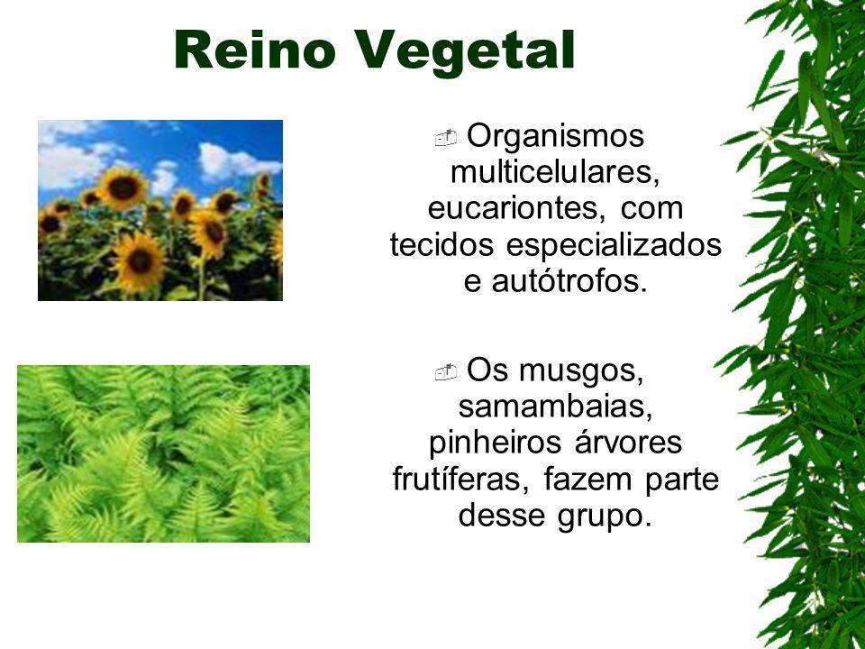 Reino Vegetal Organismos multicelulares, eucariontes, com tecidos especializados e autótrofos.