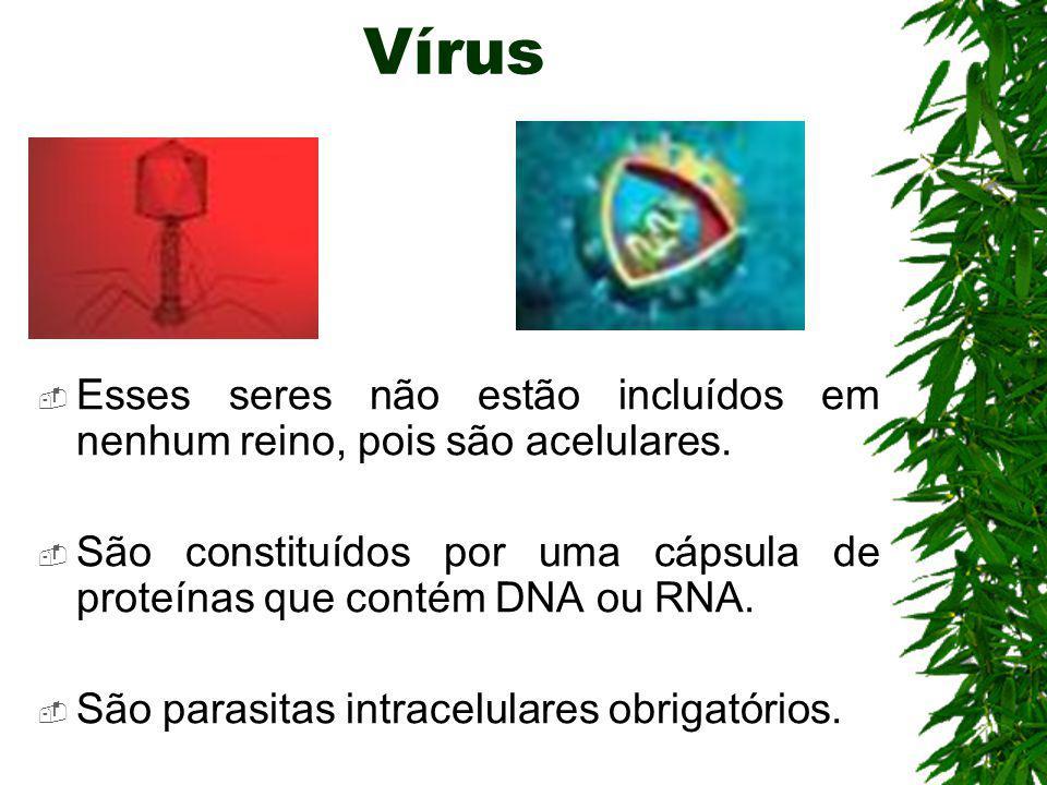 Vírus Esses seres não estão incluídos em nenhum reino, pois são acelulares.
