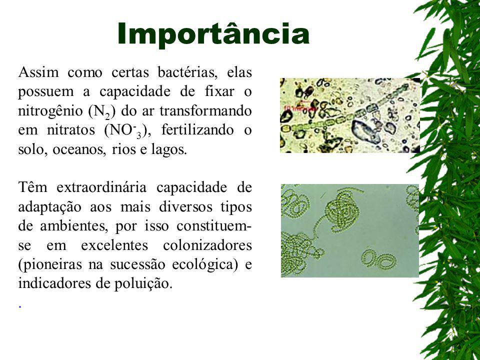 Cianobactérias As cianobactérias podem ser encontradas na água doce, salgada ou salobra, no solo úmido, sobre a casca de árvores, rochas ou até mesmo