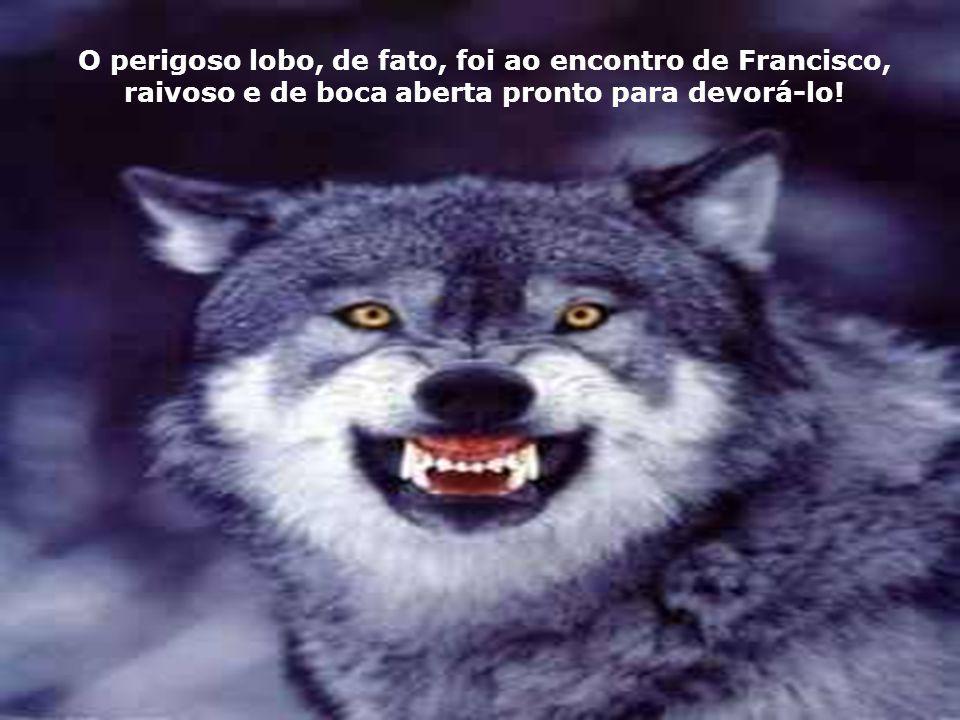 Logo, Francisco ofereceu-se para ajudar. Resolveu sair ao encontro do lobo, sozinho e desarmado, mas cheio de simpatia e benevolência pelo animal, e c
