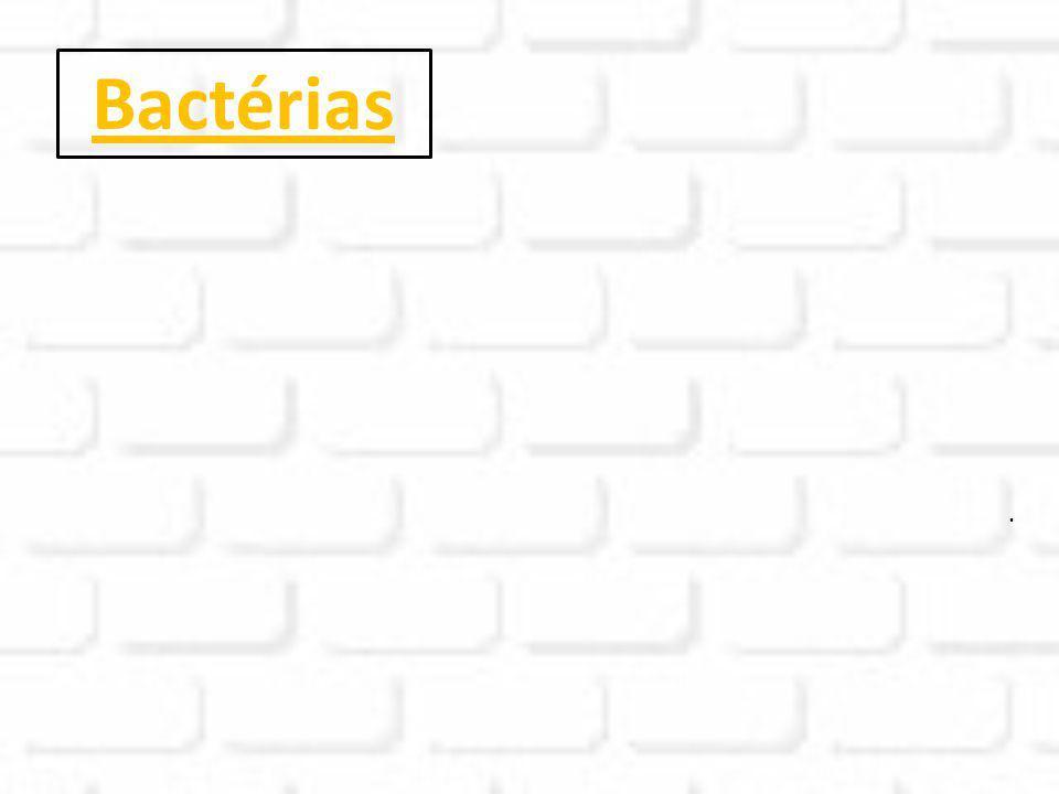 Bactérias.