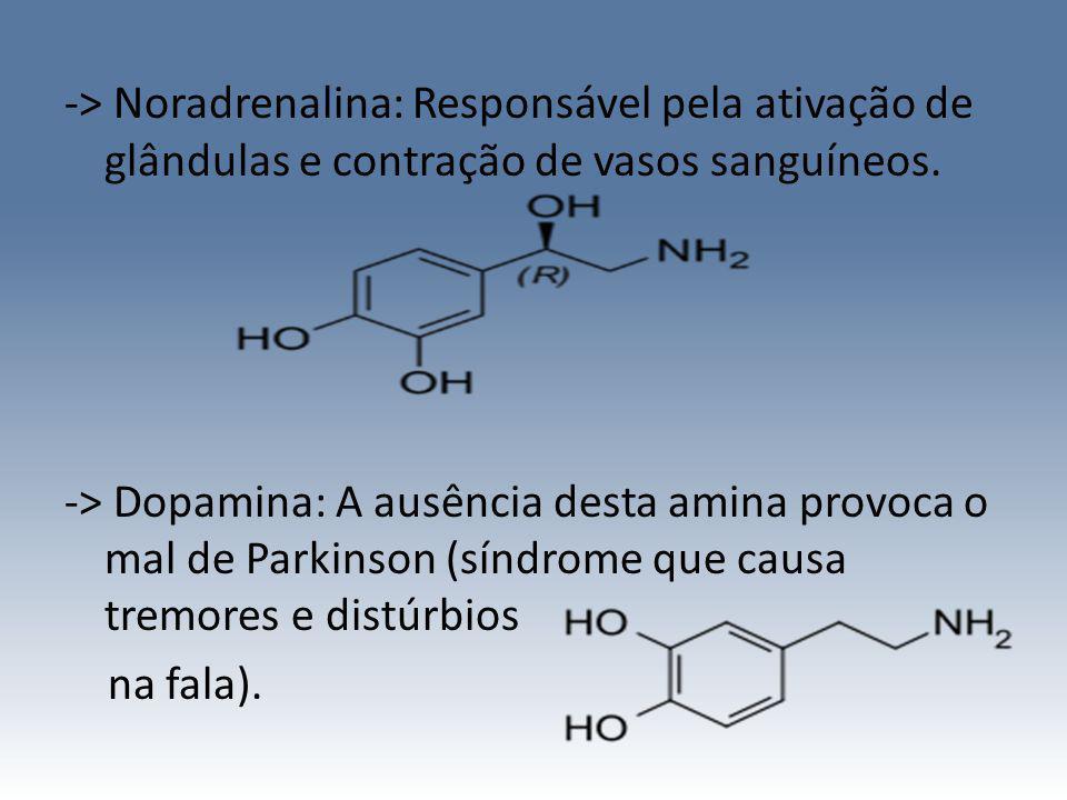 -> Noradrenalina: Responsável pela ativação de glândulas e contração de vasos sanguíneos. -> Dopamina: A ausência desta amina provoca o mal de Parkins