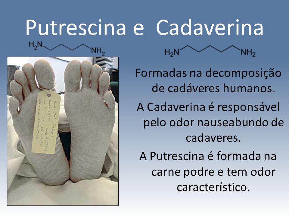 Putrescina e Cadaverina Formadas na decomposição de cadáveres humanos. A Cadaverina é responsável pelo odor nauseabundo de cadaveres. A Putrescina é f