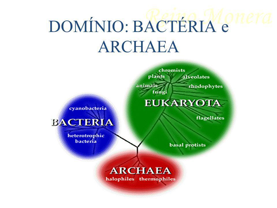 DOMÍNIO: Bactéria (bactérias e cianobactérias) Células procariotas.