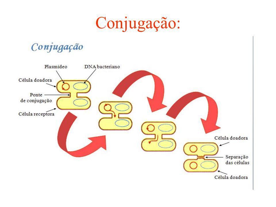 Cianobactérias: procariontes autotróficos: