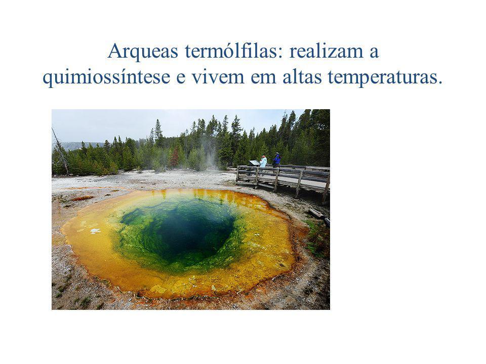 Arqueas metanogênicas: anaeróbias estritas (utilizam CO para oxidar H)