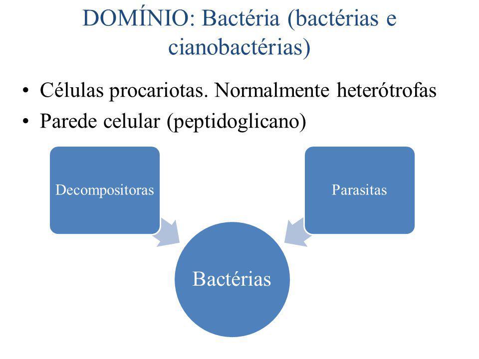 Célula bacteriana Fímbrias Cápsula Parede celular Plasmídeos DNA associado ao mesossomo Nucleóide Flagelo Enzimas relacionadas com a respiração, ligadas à face interna da membrana plasmática Mesossomo Citoplasma Ribossomos Membrana plasmática