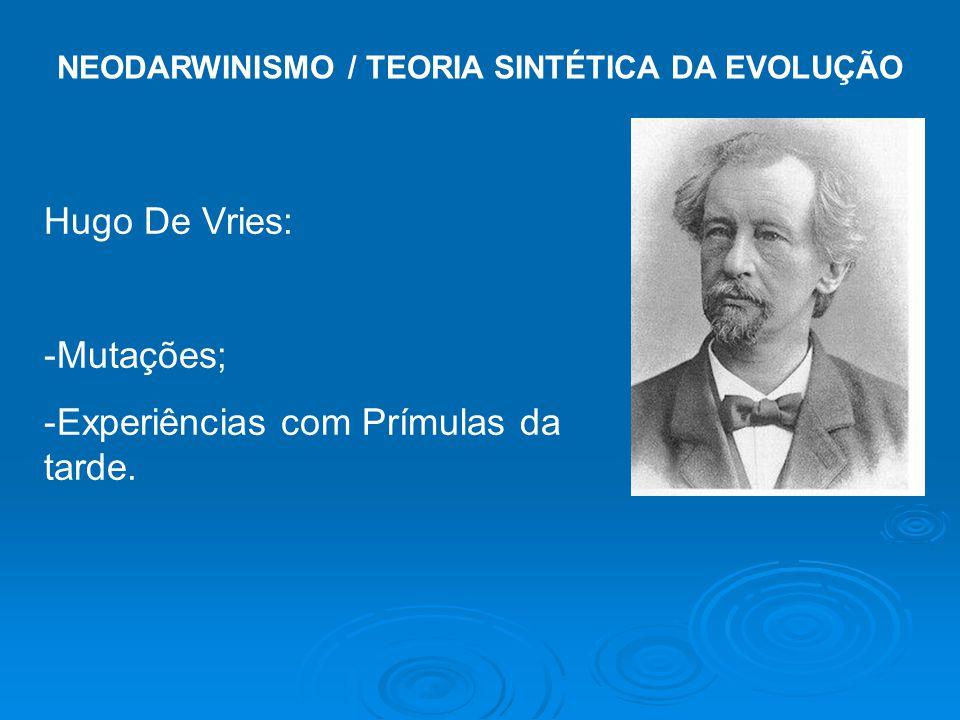 NEODARWINISMO / TEORIA SINTÉTICA DA EVOLUÇÃO Hugo De Vries: -Mutações; -Experiências com Prímulas da tarde.