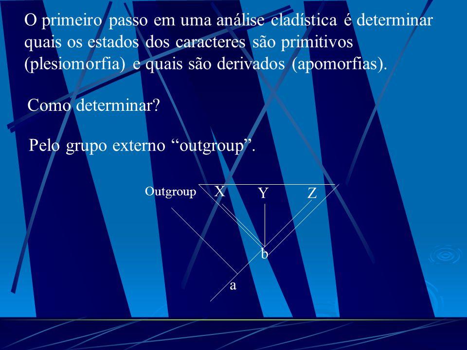 O primeiro passo em uma análise cladística é determinar quais os estados dos caracteres são primitivos (plesiomorfia) e quais são derivados (apomorfia