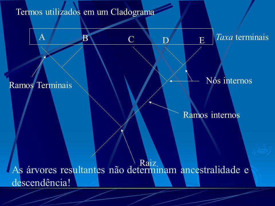 Termos utilizados em um Cladograma A B C DE Taxa terminais Ramos Terminais Ramos internos Nós internos Raiz As árvores resultantes não determinam ance