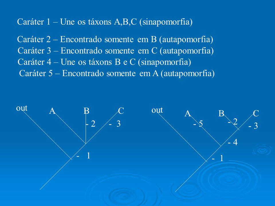 Caráter 1 – Une os táxons A,B,C (sinapomorfia) out ABC ABC - 1 - 2- 3- 5 - 2 - 3 - 4 Caráter 2 – Encontrado somente em B (autapomorfia) Caráter 3 – En