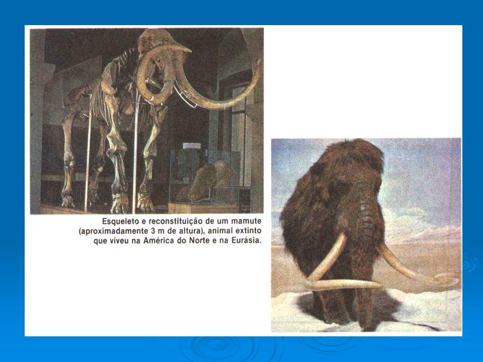 MECANISMOS PRÉ-COPULATÓRIOS: -Isolamento estacional / sazonal; -Isolamento de habitat / ecológico; -Isolamento etológico; -Isolamento mecânico.