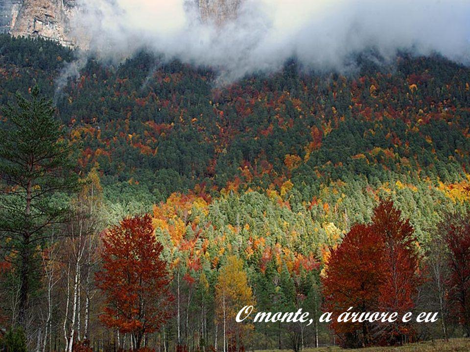 O monte, a árvore e eu