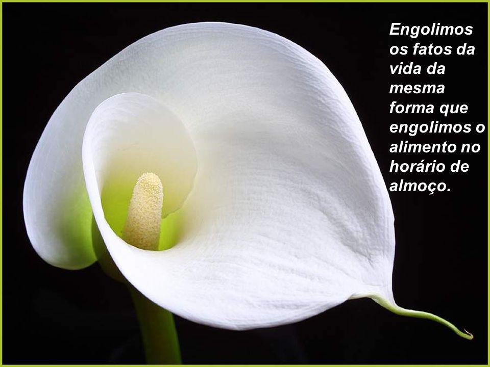 Adicionamos dias à extensão de nossas vidas, mas esquecemos de adicionar vida à extensão dos nossos dias.