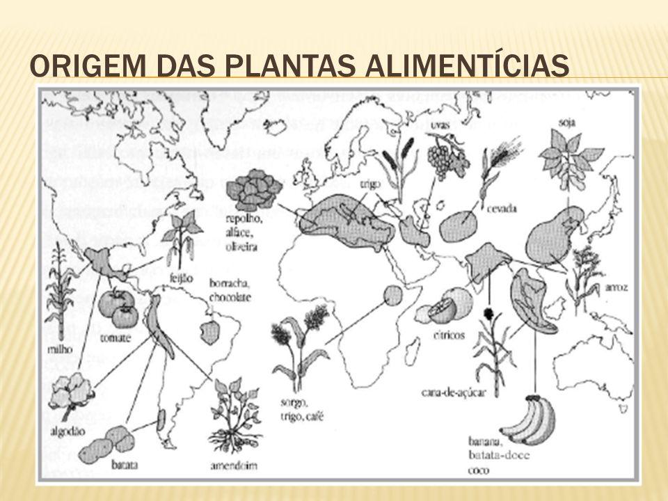 ORIGEM DAS PLANTAS ALIMENTÍCIAS