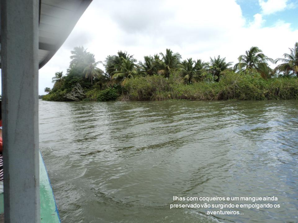 ...Próximo da foz o rio chega a ter 8km de largura.