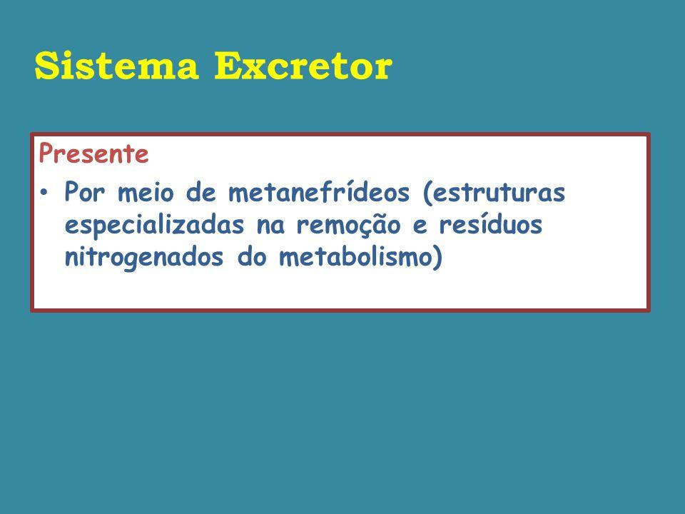 Sistema Excretor Presente Por meio de metanefrídeos (estruturas especializadas na remoção e resíduos nitrogenados do metabolismo)
